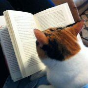 Čitanje je bitna aktivnost u životu svakog pojedinca