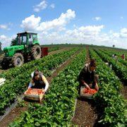 Zašto je naša domovina pored polja, rijeka, planina, dovoljno padavina i drugih prirodnih uslova ovisnik o uvozu hrane ?